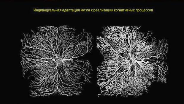 Слайд 9. Индивидуальная адаптация мозга